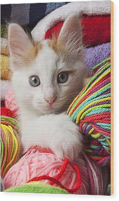 White Kitten Close Up Wood Print by Garry Gay