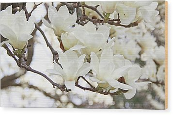 White Magnolias Wood Print by Becky Lodes