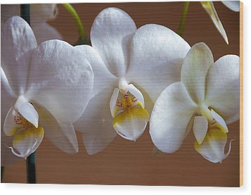 White Orchid  Wood Print by Svetlana Sewell