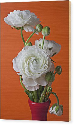 White Ranunculus Close Up In Red Vase Wood Print by Garry Gay