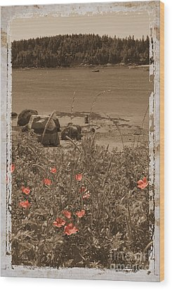 Wild Roses Wood Print by Jim Wright