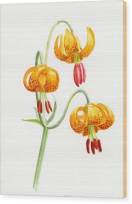 Wild Tiger Lilies Wood Print by Sharon Freeman