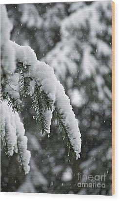 Winter Charm Wood Print by Gwyn Newcombe