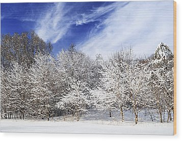 Winter Forest Covered With Snow Wood Print by Elena Elisseeva