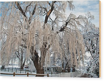 Winter Willow Wood Print by Harry Strharsky
