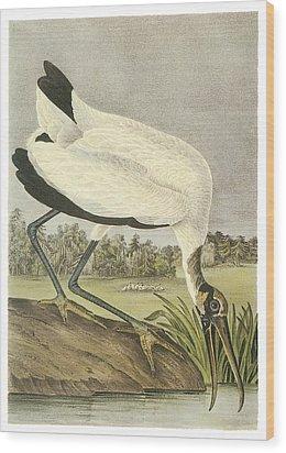 Wood Stork Wood Print by John James Audubon