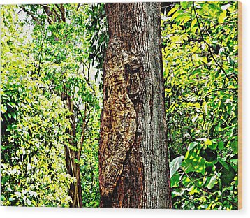 Woodpecker Tree Wood Print by Piety Dsilva