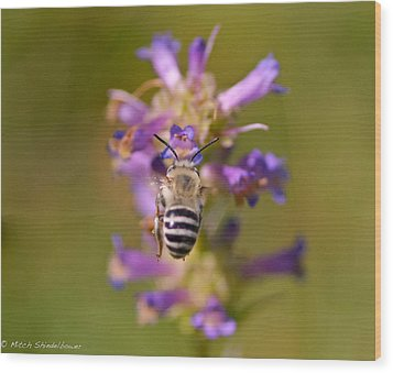 Worker Bee Wood Print by Mitch Shindelbower