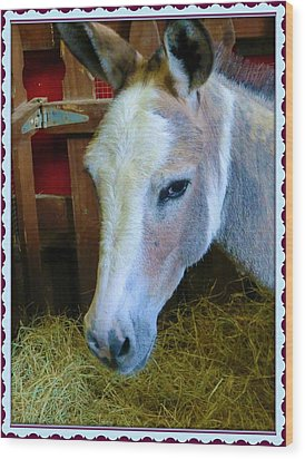 Yahoo The Mule Wood Print by Mindy Newman
