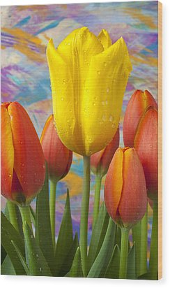 Yellow And Orange Tulips Wood Print by Garry Gay