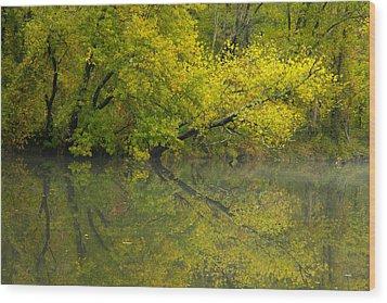 Yellow Autumn Wood Print by Karol Livote