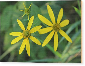 Yellow Coneflower Wood Print by James Hammen