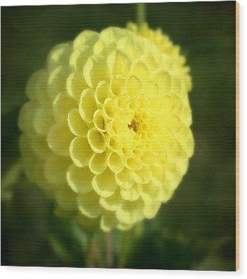 Yellow Dahlia Wood Print by Cathie Tyler