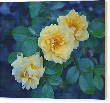 Wood Print featuring the photograph Yellow Roses by Rodney Campbell