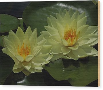 Yellow Water Lilies Wood Print by Chad and Stacey Hall