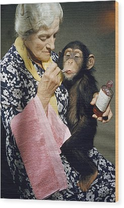 Young Chimpanzee Sips Medicine Wood Print by B. A. Stewart And David S. Boyer