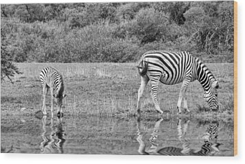 Zebras Wood Print by Lynn Bolt