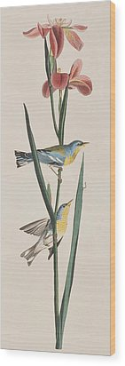 Blue Yellow-backed Warbler Wood Print by John James Audubon