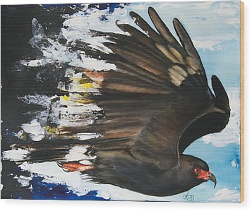 Everglades Snail Kite Wood Print by Anthony Burks Sr