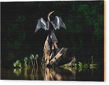 Anhinga Anhinga Anhinga, Pantanal Wood Print by Panoramic Images