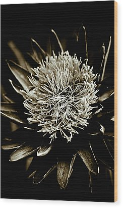 Artichoke Flower Wood Print by Frank Tschakert