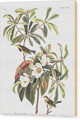 Bachman's Warbler  Wood Print by John James Audubon