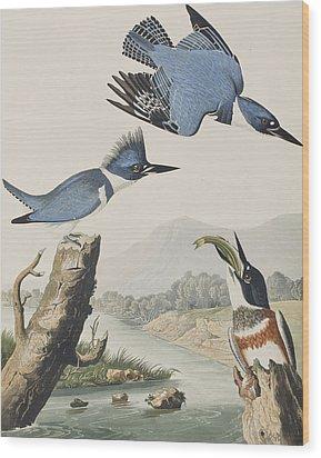 Belted Kingfisher Wood Print by John James Audubon