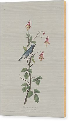 Black-throated Blue Warbler Wood Print by John James Audubon
