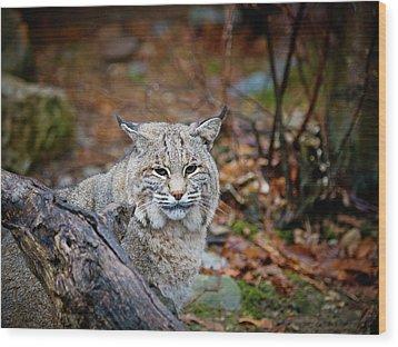 Bobcat Wood Print by Jim DeLillo