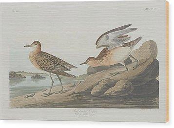 Buff-breasted Sandpiper Wood Print by John James Audubon