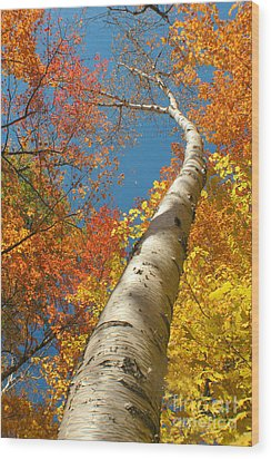 Canadian Autumn Wood Print by Mircea Costina Photography