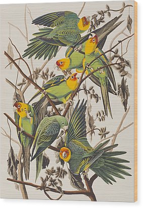 Carolina Parrot Wood Print by John James Audubon