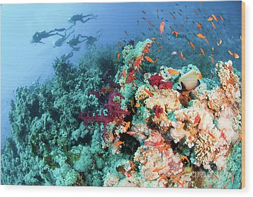 Coral Reef  Wood Print by Hagai Nativ