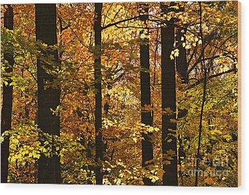 Fall Forest Wood Print by Elena Elisseeva