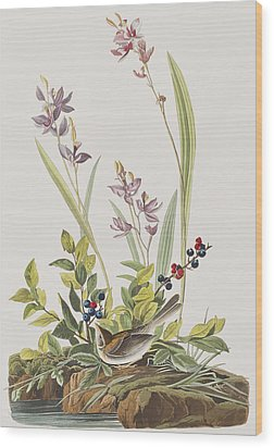 Field Sparrow Wood Print by John James Audubon