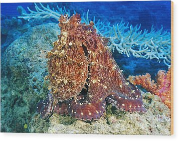 Fiji, Day Octopus Wood Print by Dave Fleetham - Printscapes