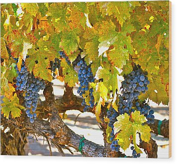 Grapes Wood Print by Dorota Nowak
