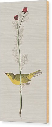 Hooded Warbler Wood Print by John James Audubon