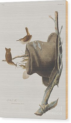 House Wren Wood Print by John James Audubon