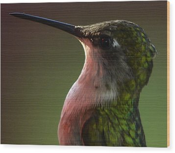Hummingbird Wood Print by Brian Stevens