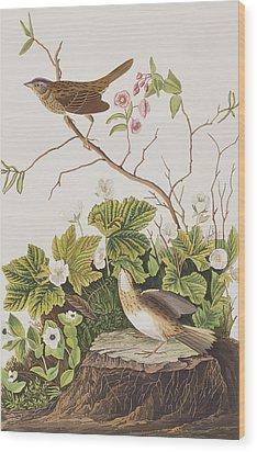Lincoln Finch Wood Print by John James Audubon