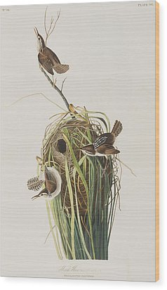 Marsh Wren  Wood Print by John James Audubon