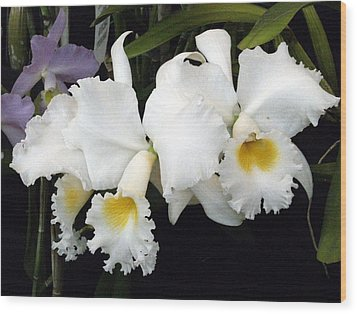 Orchids In White Wood Print by Mindy Newman