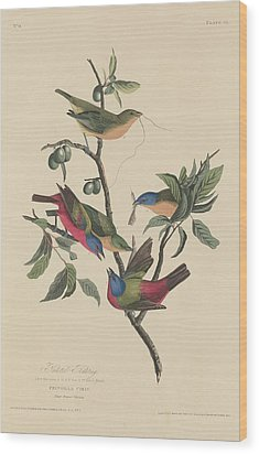 Painted Bunting Wood Print by John James Audubon