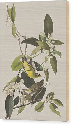 Palm Warbler Wood Print by John James Audubon