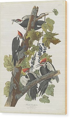 Pileated Woodpecker Wood Print by John James Audubon
