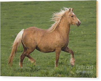 Prancing Pony Wood Print by Angel  Tarantella