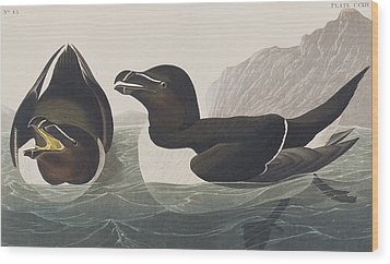 Razor Bill Wood Print by John James Audubon