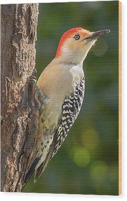 Red Bellied Woodpecker Wood Print by Jim Hughes