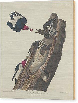Red-headed Woodpecker Wood Print by John James Audubon